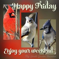 Happy Friday, Enjoy Your Weekend Friday Wishes, Weekend Greetings, Enjoy Your Weekend, Friday Weekend, Network For Good, Tumblr Image, Facebook Image, Pictures Images, Happy Day
