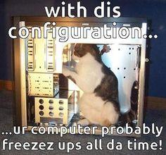 Tech Support  Cat memes - kitty cat humor funny joke gato chat captions feline laugh photo