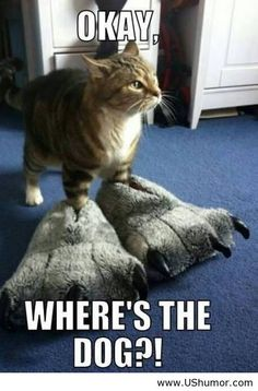 Where's the dog...