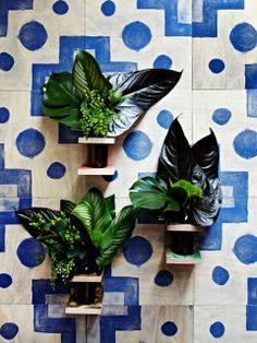 wall vases and timber tiles (bonnie and neil) Timber Tiles, Bonnie And Neil, Motifs Textiles, Wall Tiles, Decoration, Indoor Plants, Indoor Gardening, House Plants, Planting Flowers