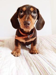 Yes...he's mine!