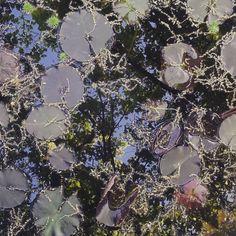 "Anne-K on Instagram: ""Quelques chatons flottants... #walkoftheday #landartist #landart #botanicalartlovers #botanicalinspiration #wabisabi #haiku…"" Land Art, Ponds, Wabi Sabi, Botanical Art, Haiku, Landscape Art, Colours, Water, Artist"
