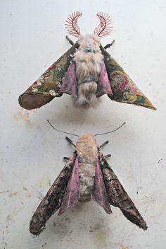 Mr. Finch - Growingmoths
