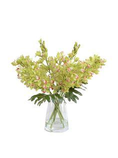 New Growth Designs Faux Cymbidium Orchid Vase, Green, http://www.myhabit.com/redirect/ref=qd_sw_dp_pi_li?url=http%3A%2F%2Fwww.myhabit.com%2F%3F%23page%3Dd%26dept%3Dhome%26sale%3DA2J9JOXJ86RQZ2%26asin%3DB00CYDSBVG%26cAsin%3DB00CYDSBVG