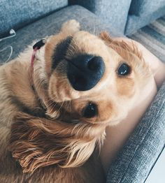 The Versatile Golden Retriever - Champion Dogs Animals And Pets, Baby Animals, Funny Animals, Cute Animals, Cute Puppies, Cute Dogs, Dogs And Puppies, Funny Dogs, Cute Creatures