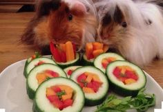 Veggie sushi for the pigs