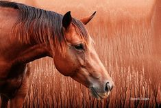 Texas Horse Digital Art Giclee Print Textured by GrayWolfGallery My Horse, Horses, Artwork Prints, Canvas Prints, Horse Artwork, Majestic Horse, Old Barns, Realism Art, Texture Art