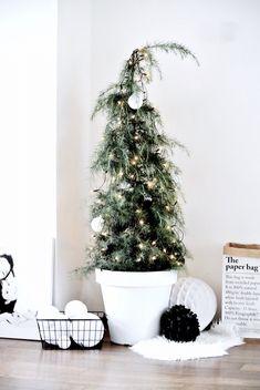 Ceder christmas tree #xmas #blackwhite