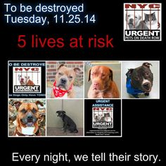 TO BE DESTROYED:5 Dogs to be euthanized by NYC ACC- TUES. 11/25/14. This is a HIGH KILL shelter group. YOU may be the only hope for these pups! ****PLEASE SHARE EVERYWHERE!!!!To rescue a Death Row Dog, Please read this:  http://urgentpetsondeathrow.org/must-read/    To view the full album, please click here:    https://www.facebook.com/media/set/?set=a.611290788883804.1073741851.152876678058553&type=3