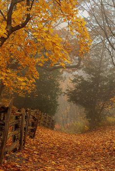 New Fall Nature Photography Leaves Paths Ideas Beautiful World, Beautiful Places, Beautiful Scenery, Beautiful Pictures, Autumn Scenes, Fall Pictures, Autumn Inspiration, Colour Inspiration, Belle Photo