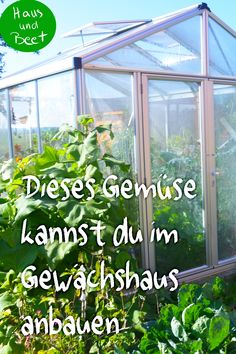 Growing vegetables in a greenhouse - what is recommended? On the one hand, you should clarify the size of the greenhouse, the location and the irrigation option. Greenhouse Growing, Greenhouse Gardening, Irrigation, Growing Vegetables, Growing Plants, Garden Steps, Garden Paths, Back Gardens, Garden Care