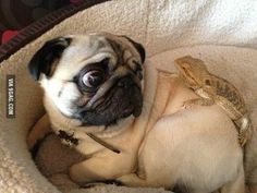 Pug is not so sure about this
