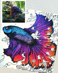 from #animorphia inspired by this #beautiful and #colourful Betta fish  #adultcoloringbooks #kerbyrosanes #art #beautifulcoloring #blue #red #purple #staedtler #fabercastell #pencil ✏