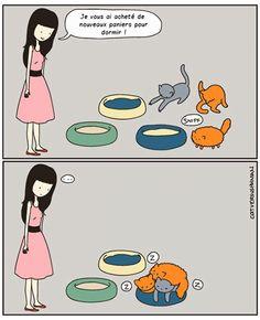 Ce quelques bandes dessinées très drôles résument parfaitement ce qu'est le quotidien quand on a un chat !