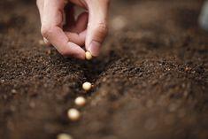 Préparation du sol au printemps