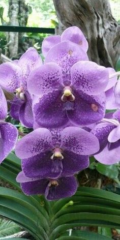 Purple orchids #flowers                                                                                                                                                                                 More