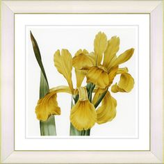 Modern Vintage Botanical No. 46W by Zhee Singer Framed Giclee Print Fine Wall Art