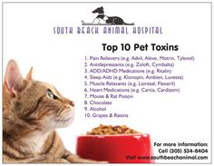 Top Ten Pet Toxins