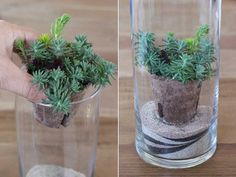 These DIY sand terrarium are simple and easy to make! Farbiger Sand, Sand Art, Diy Originales, Sand Glass, Dish Garden, Colored Sand, Terrarium Diy, Summer Wreath, Planting Succulents