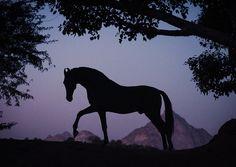 Caballos Marwari, Marwari Horses, Rare Horses, Wild Horses, Beautiful Horse Pictures, Beautiful Horses, Jungle Life, Wild Mustangs, Equine Photography