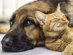News and articles about your pet Vets Still Essential During Lockdown: How To Put Safety First When Taking Your Furry Friend For A Visit, Household Items Can Be Toxic to Pets - Veterinary Medicine . Baby Animals, Funny Animals, Cute Animals, Funniest Animals, Canis, Photo Chat, Tier Fotos, Shelter Dogs, Shelters
