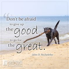 Never settle for just second best. #motivationalquotes #motivation #inspirationalquotes #inspiration #dog #labrador #Rockefeller