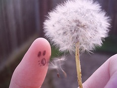 finger blowing on a dandelion