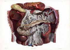 Nicolas Henri Jacob - Illustration for Traité complet de l'anatomie de l'homme comprenant la médecine opératoire (1831-1854  https://pinterest.com/pin/287386019941966857/) by Jean-Baptiste Marc Bourgery (https://pinterest.com/pin/287386019948321810).