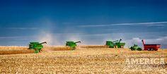 Fast Corn Harvest | Flickr - Photo Sharing!