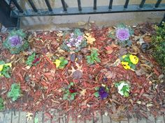 Flowers blooming in Dallas a week before Christmas (I live in Chicago we don't get that here)