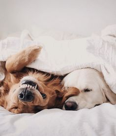 Baby animals, animals and pets, funny animals, cute animals, cute pup Cute Baby Animals, Animals And Pets, Funny Animals, Cute Dogs And Puppies, I Love Dogs, Doggies, Adorable Puppies, Sleeping Dogs, Cute Creatures