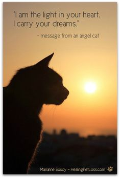 Animal Communicator Helps Pet Loss Grief of Animals Crazy Cat Lady, Crazy Cats, Pet Loss Grief, Pet Remembrance, Matou, Cat Quotes, Rainbow Bridge, Pet Memorials, Cats And Kittens
