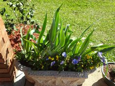 Spring container filled with irises and pansies.