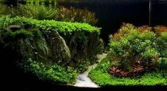 #aquascape #nature #aquarium #plants #aqua #crystal #water #tank #fishtank #plantedtank #scape #ADA #design #shrimp #Amano #aquacare #aquavrn #vrn