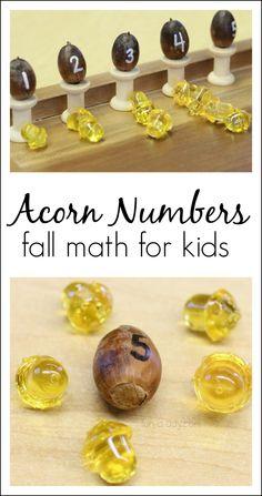 Fall math activities for preschoolers using acorn numbers!