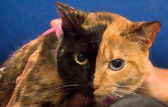 Venus the Two-Faced Cat http://ift.tt/2gUE2iJ