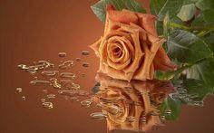 Toffee Brown Rose