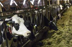 Landwirt und Verbraucher im Dialog - in der FOOD & FARM. Hier auf dem Betrieb von Sven Klingemann.