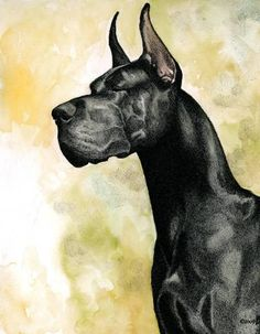 this one reminds me of my first great dane Blast I miss him