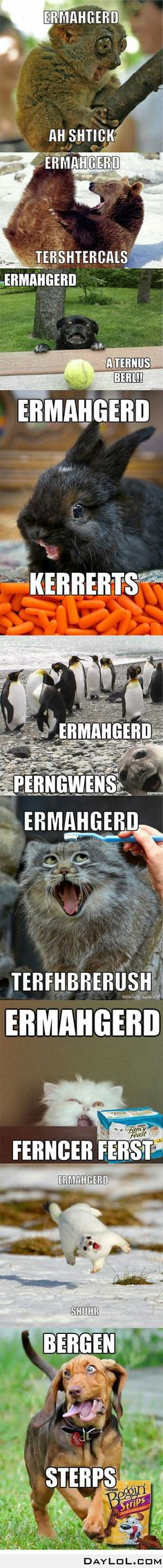 ERMAHGERD!!! {The one with the bear really made me lose it.} Hahaha @Emily Wick I bet you'll love this.You too @Megan Myers