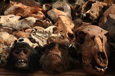 Voodoo Skulls by Adam CohnSkulls being sold for voodoo purposes in Bohicon, Benin, West Africa. My Ex Girlfriend, Voodoo Spells, Love Spell That Work, Spell Caster, Love Spells, Skull And Bones, West Africa, Black Magic, Friends In Love