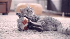 Whiskas Katzenfutter TV Werbung 2013