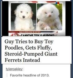 favorite headline of 2013