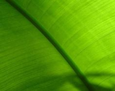 organic #green green green