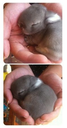 Baby bunnies are the best
