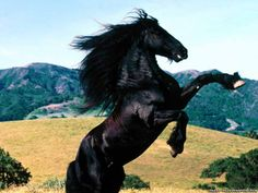 Black Horse Running | beautiful-horses-black-horse-files-animals-wallpapers_for_desktop.jpg