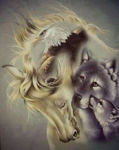 . Wolf Images, Wolf Photos, Wolf Pictures, Horse Pictures, Animal Spirit Guides, Wolf Spirit Animal, Beautiful Wolves, Animals Beautiful, Native American Drawing