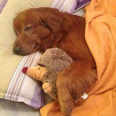 Buenas noches   #PetsWorldMagazine #RevistaDeMascotas #Panama #MascotasPty #PetsMagazine #MascotasAdorables #Perros #PerrosPty #PerrosPanama #Pets #PetsLovers #Dogs #DogLovers #DogOfTheDay #PicOfTheDay #Cute #SuperTiernos