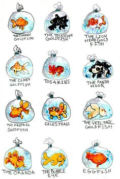 many types of goldfish. by ~MiniMushroom on deviantARTThe many types of goldfish. by ~MiniMushroom on deviantART Goldfish Types, Goldfish Tank, Goldfish Aquarium, Pet Goldfish, Goldfish Breeding, Fantail Goldfish, Goldfish Tattoo, Animals And Pets, Cute Animals