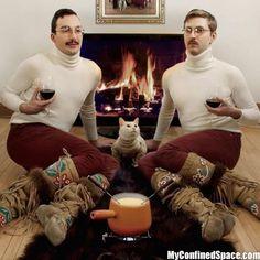 Funny Weird Photos Cats Cat